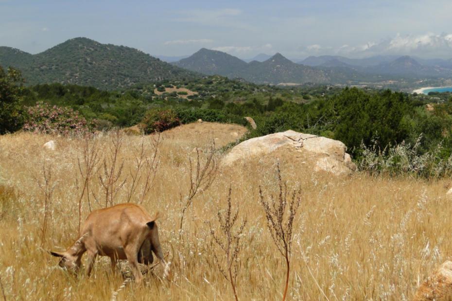 Góry z kozą w drodze na Costa Rei.