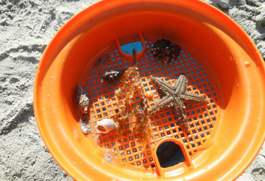 Sardynia - skarby morza
