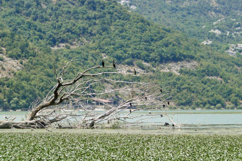 Obserwacja ptaków, jezioro szkoderskie