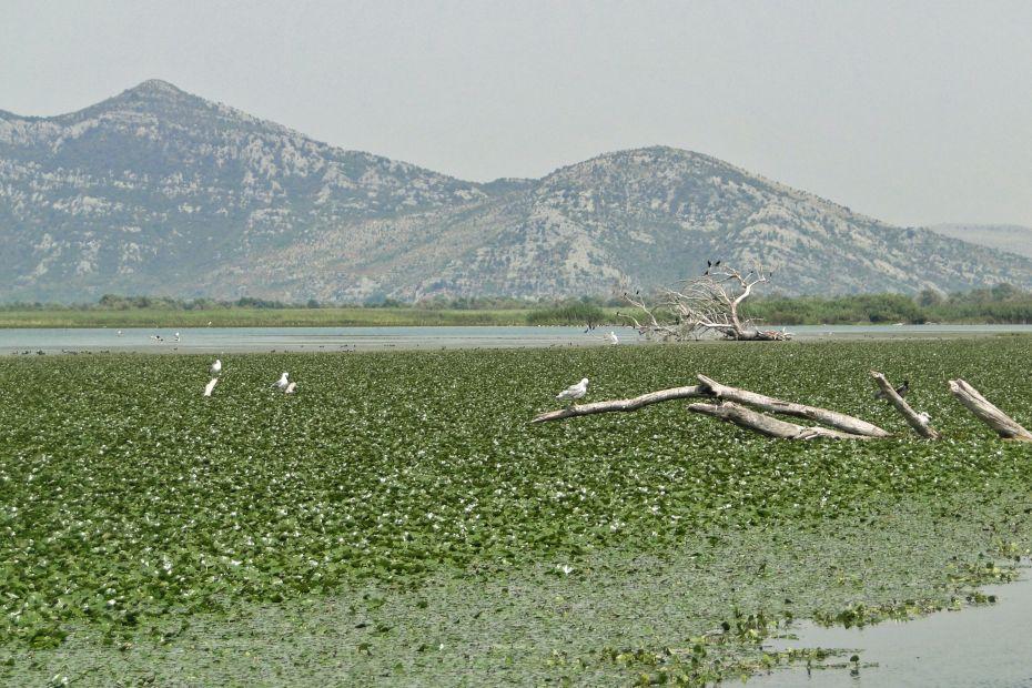 Jezioro Szkoderskie, Czarnogóra